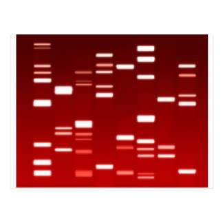 What Are the Differences Between DNA Fingerprinting and